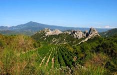 Vue des vignes sur les Dentelles de Montmirail